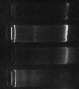 image of electrophoresis of 16s DNA amplicons